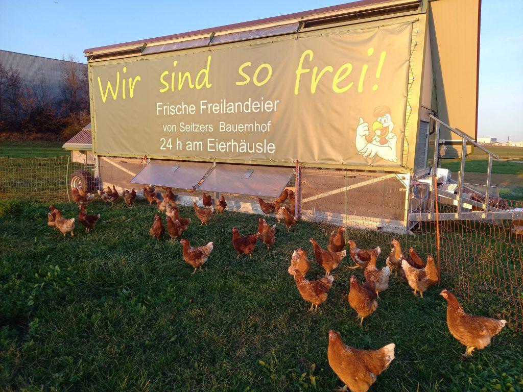 Unser neues Hühnermobil